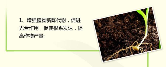 如金土壤板结治理菌种