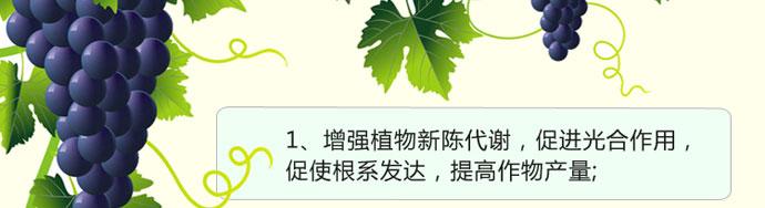 如金葡萄种植em菌种