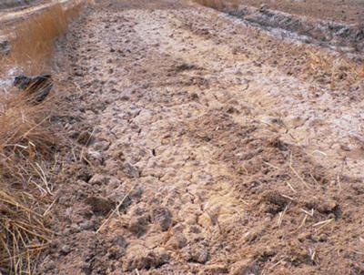 还可以疏松板结的土壤,增加土壤团粒结构,增强土壤保水,保肥能力.